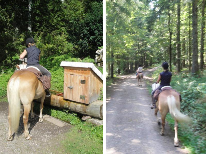 Im Wald dürfen die Pferde im Galopp mal so richtig Gas geben.