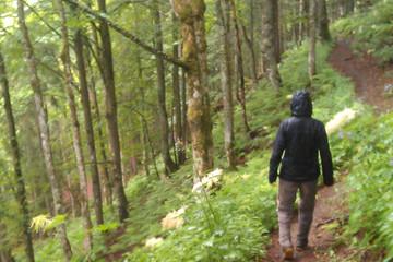 Wanderung von der Stollenbacher Hütte zum Feldberg