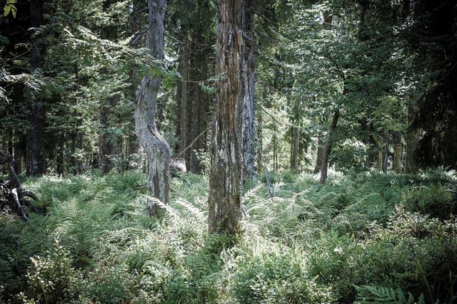So funktioniert der Wald als perfekt ausgeklügeltes und aufeinander abgestimmtes und selbsterhaltendes Ökosystem.