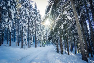 Winterwandern für Sommerfans