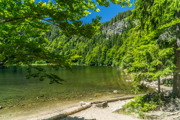 Seen im Schwarzwald