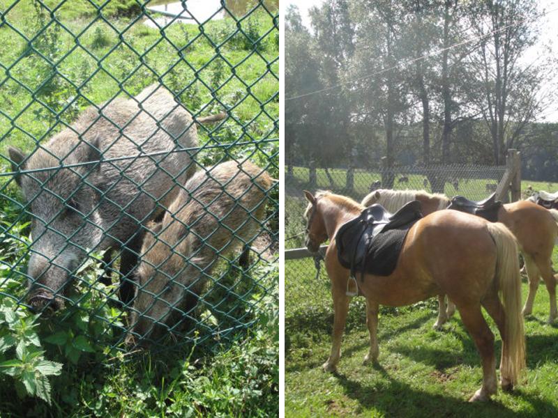 Unsere Pferde sind von dem Treiben in dem Wildgehege wenig beeindruckt.
