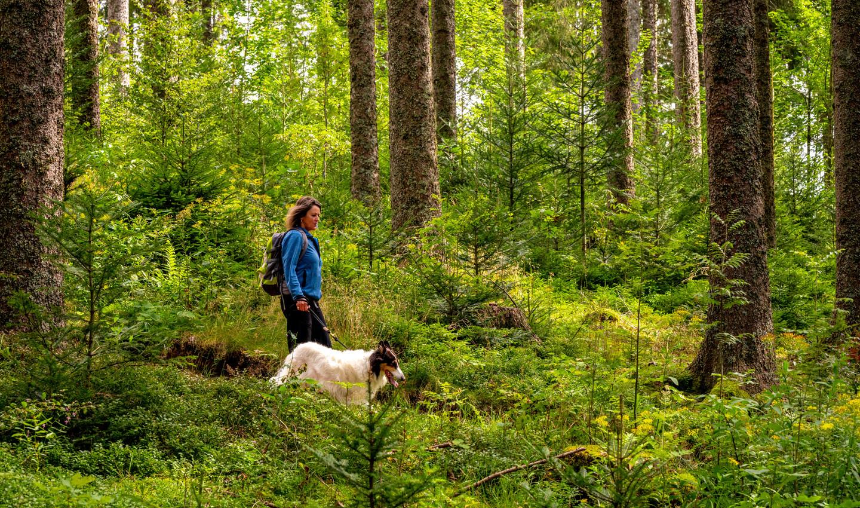 Wanderin mit Hund in der eindrucksvollen Hochschwarzwaldlandschaft