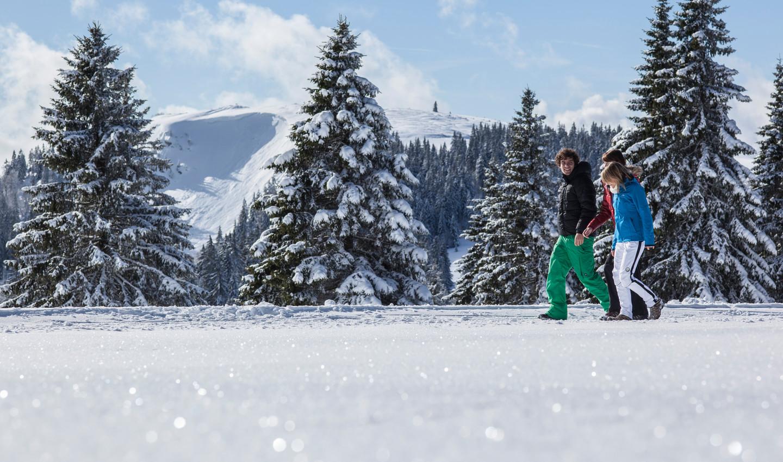 Winterwandern im Hochschwarzwald