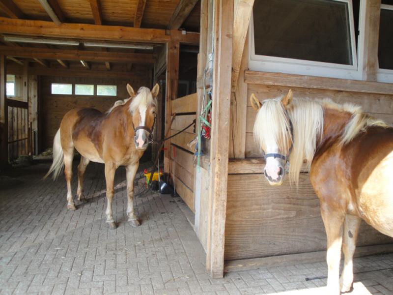 Es war ein anstrengender aber wunderschöner Tag, nicht nur für uns sondern auch für die Pferde.