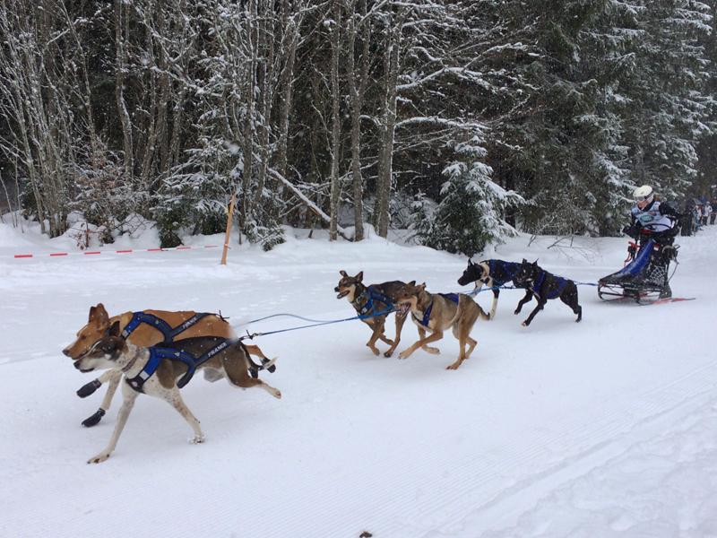 Die jährlich veranstalteten Schlittenhunderennen sind auf jeden Fall einen Besuch wert.