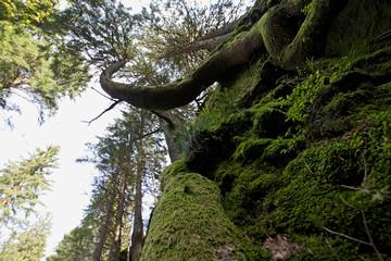 Tierwelt in den Baumkronen