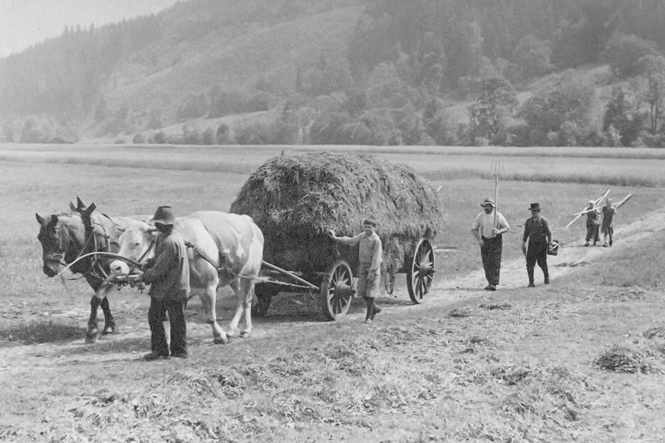 Mit der zunehmenden Mechanisierung der Landwirtschaft sank die Zahl der Wälderpferde.