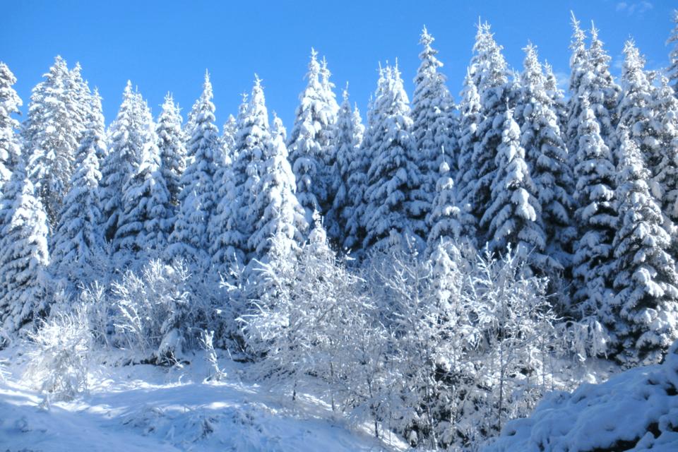 Das einst alltägliche Bild des einsamen Holzfällers, der an kurzen Winternachmittagen im Wald seiner Arbeit nachgeht, entwickelt sich allmählich zu einer Erinnerung an vergangene Zeiten.