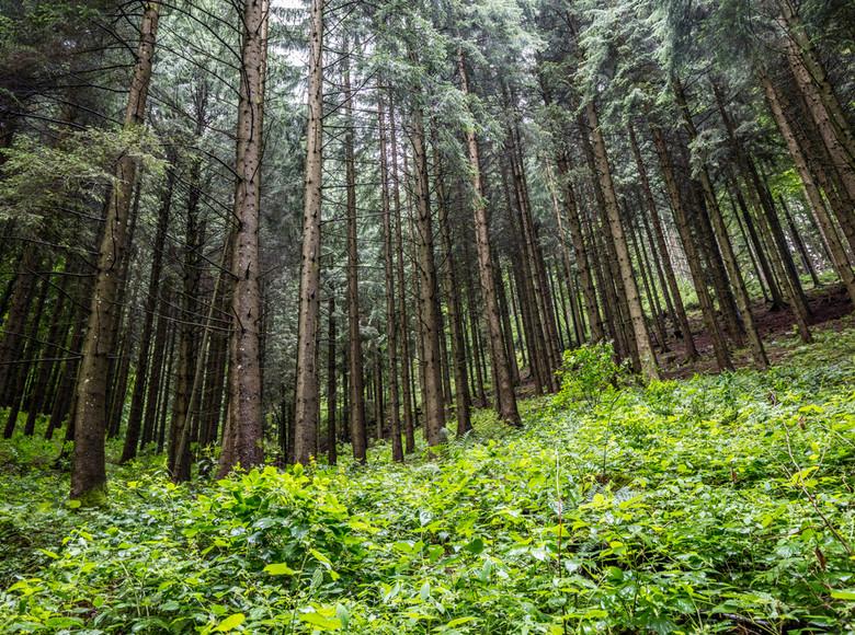 Bäume  kommunizieren und achten aufeinander.