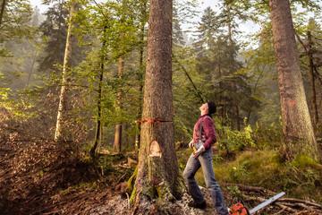 Holz als Lebenselixier
