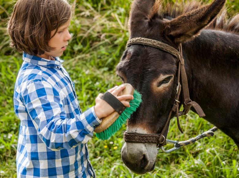 """""""Esel sind sehr soziale Tiere, sie sind Herdentiere und wenn es laufen soll, dann müsst ihr am ersten Tag eine Herde werden"""""""