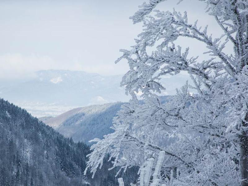 Schneebedeckte Bäume und eine klare Sicht Richtung Freiburg.