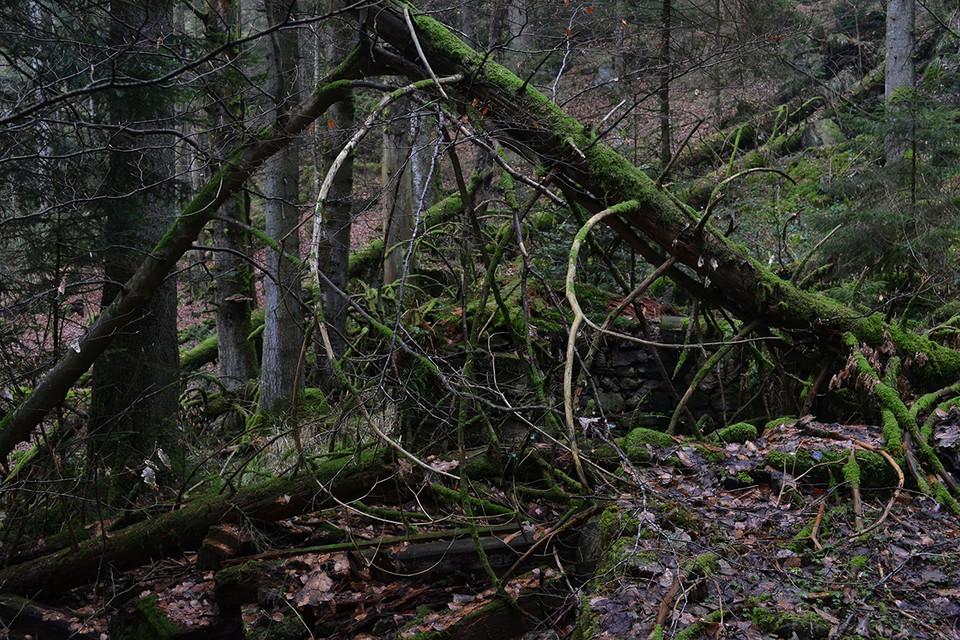 Heute hat sich der Wald das Gelände der Hirschbachmühle zurück geholt