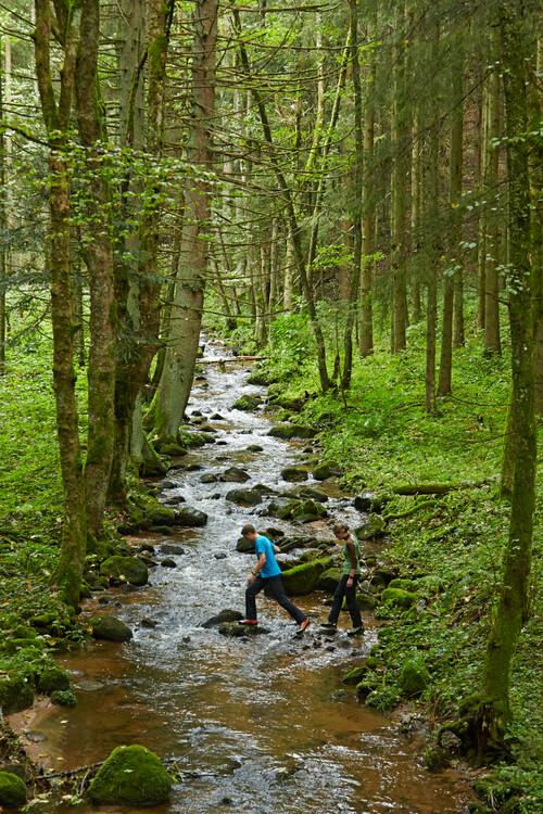 Wandern in Ühlingen-Birkendorf
