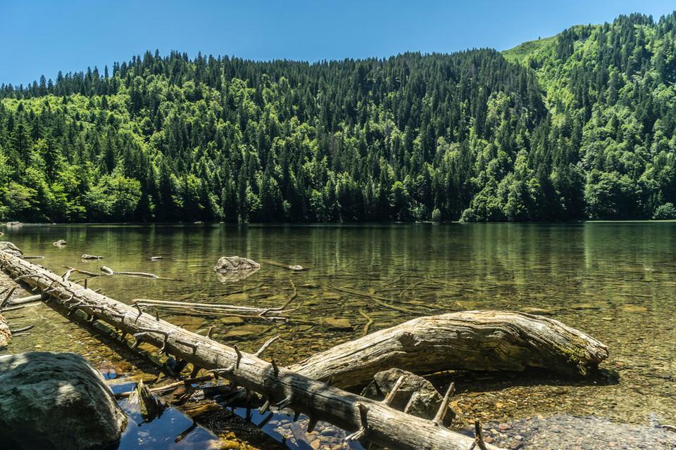 Mächtige Tannen und Fichten spiegeln sich auf dem Wasser des Feldsees wider