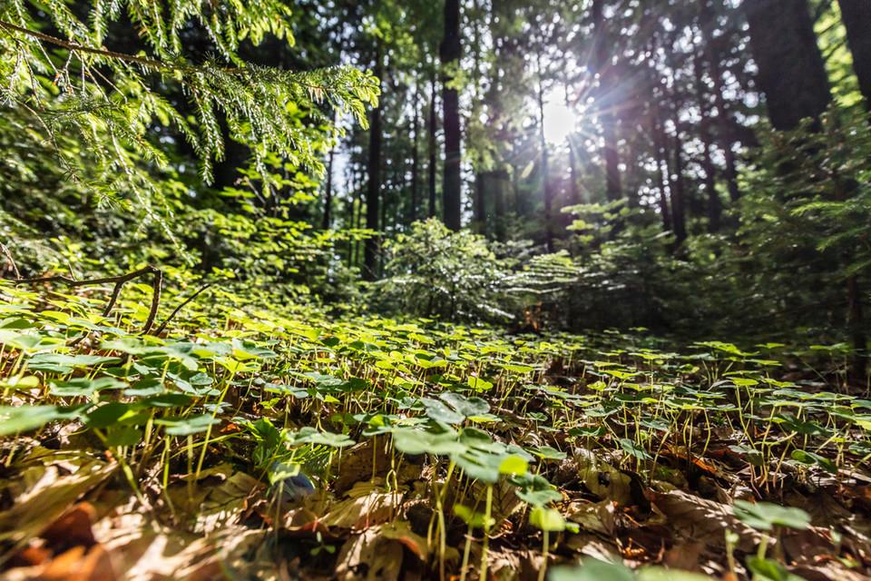 Der Waldboden ist ein komplexer Lebensraum.