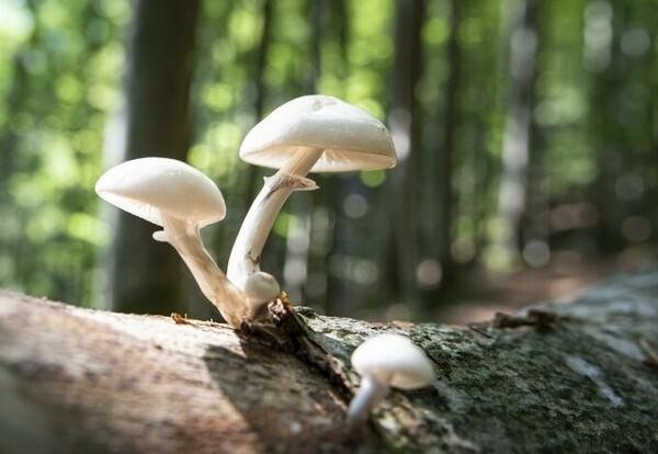 Pilz-Wanderung