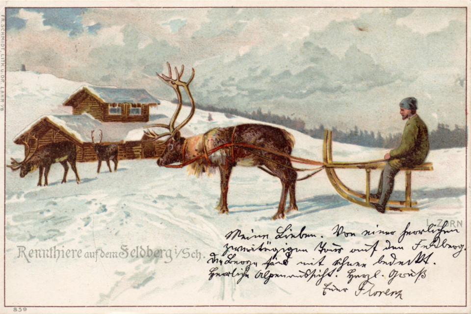 Um die Attraktivität seines Hotels zu steigern, kaufte Mayer sogar im Sommer 1898 in Norwegen vier Rentiere.