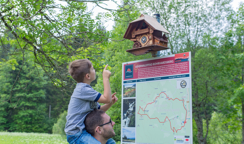 Unterwegs auf dem U(h)rwaldpfad Rohrhardsberg