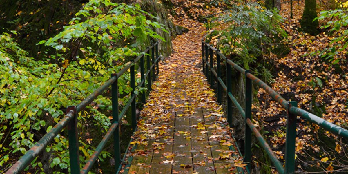 Ein schöner Sonntagmorgen im Herbst perfekt für Herbstwald Bilder.