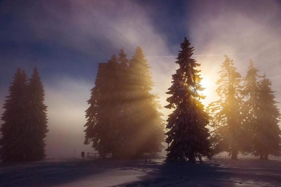 Erste Sonnenstrahlen fallen auf die Spitzen der Tannenzweige.