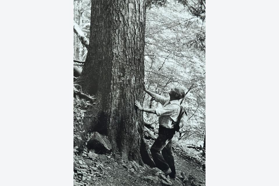 Fritz Hockenjos beim Begutachten eines Baumes