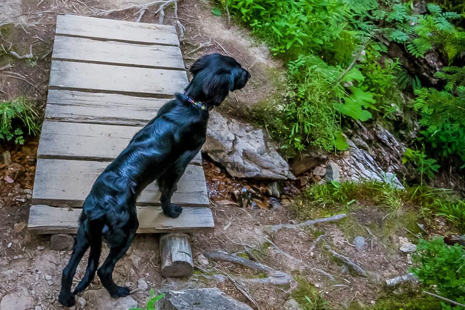Erst sprudelt nur ein kleines Rinnsal aus einer Quelle im Wald, das kurz darauf ein quirliger Bach wird