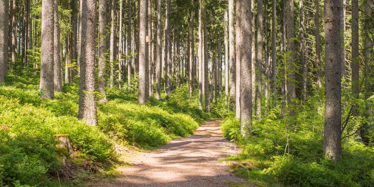 Waldputzete