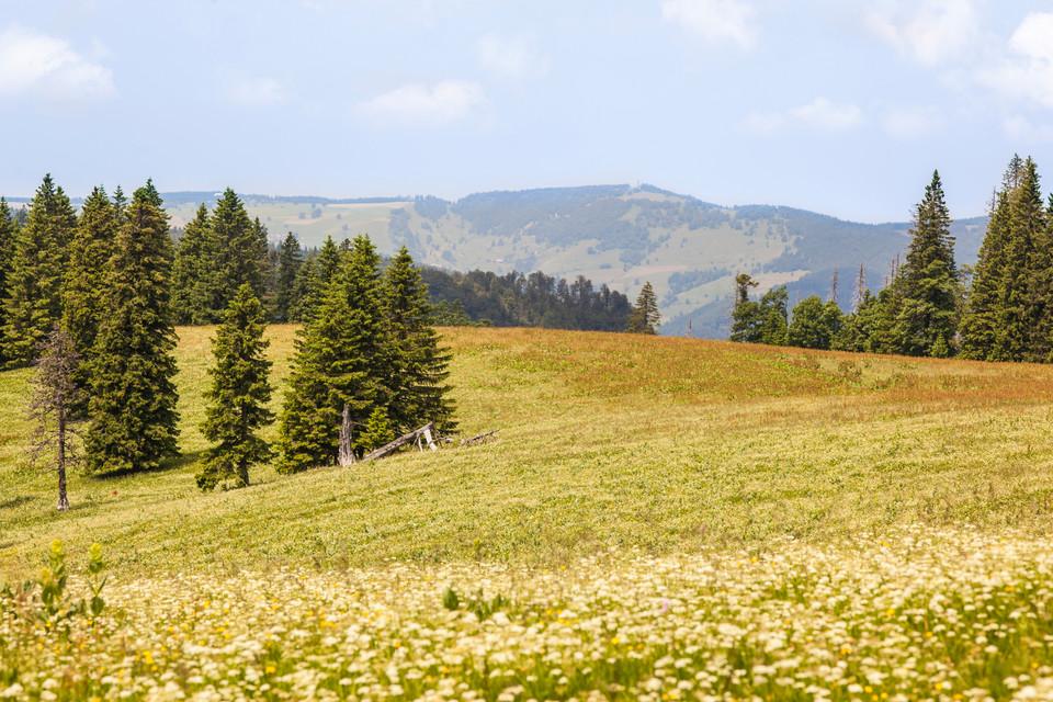 Hochschwarzwälder Sonnenplätze Blick zum Schauinsland von Wilhelmer Hütte Feldberg