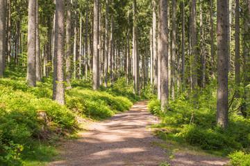 Gemeinsam anpacken für saubere Wälder