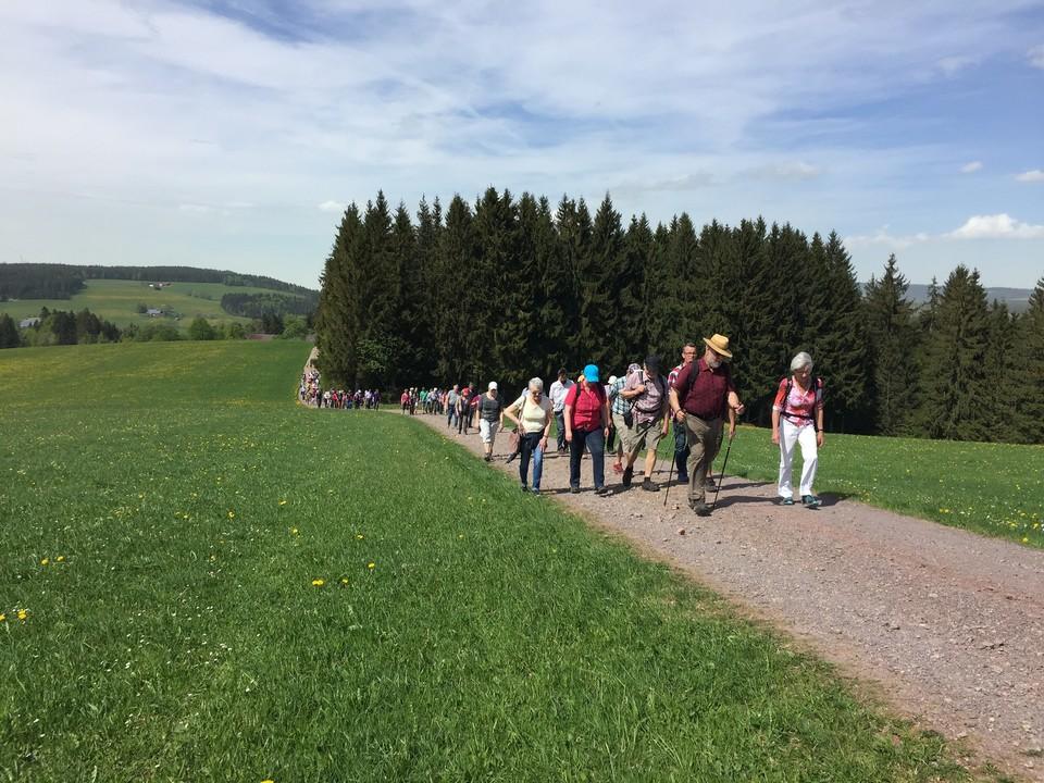 Wandern auf den Spuren der Vergangenheit: Auf der rund sieben Kilometer langen Stelen-Route von St. Märgen zum Thurner beschreiben Info-Tafeln an jeder Stele jeweils eine Jahrhundert Dorfgeschichte