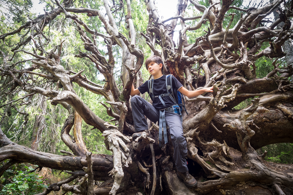 Klettern und balancieren auf Baumstämmen.