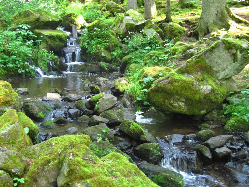 Wir wanderten entlang der Bachläufe, auf schmalen Waldpfaden, über Brücken und an allerlei Naturspektakeln.