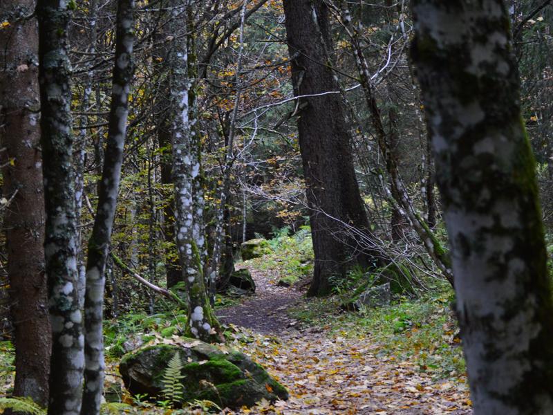 Ein gutes Motiv der Herbstwald und die kleinen Wasserfälle der Wiese