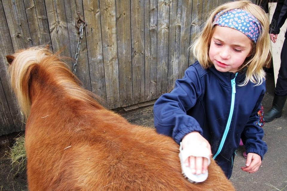 Das Pony muss gestriegelt werden. Hochkonzentriert widmet sie sich dieser Aufgabe.