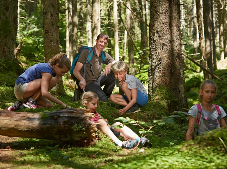 Im Wald gibt es unendlich viel zu entdecken und daher ist er perfekt für Kinder und Familien.