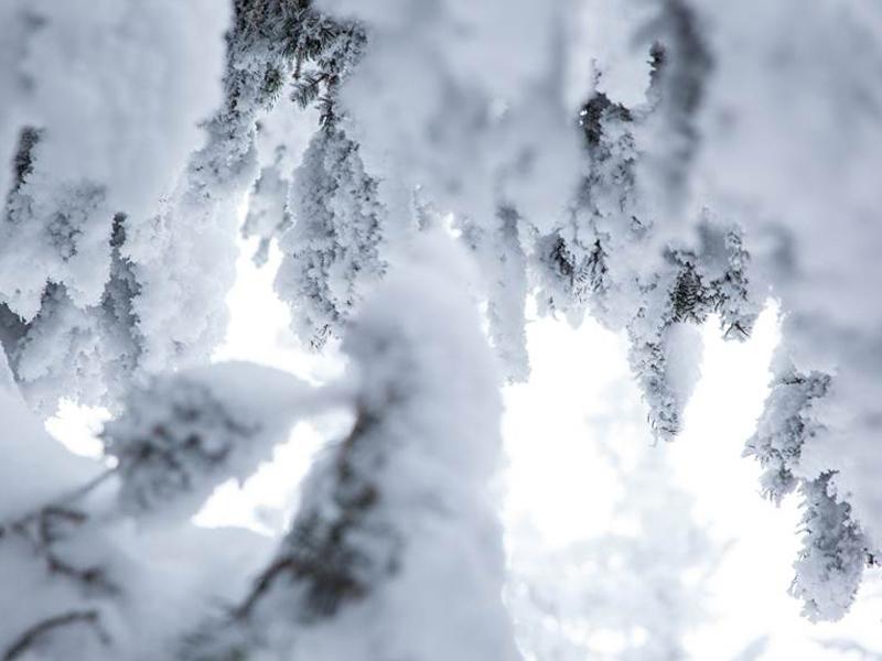 Die wunderschöne Schneedecke wir von allen nur bestaunt.