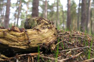 Rushhour auf dem Waldboden