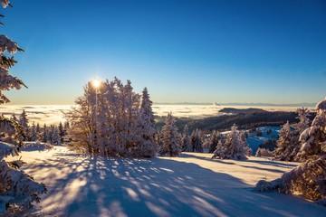 Schneegeflüster im Winterwald