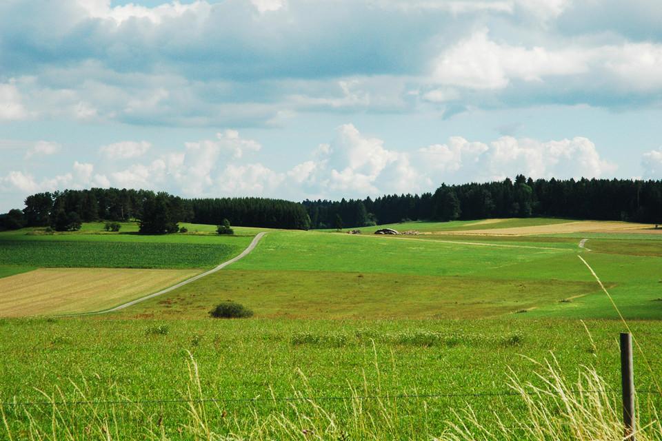 Die Rötenbacher Wiesen stehen unter Naturschutz und sind Lebensraum für zahlreiche vom Aussterben bedrohte Tier- und Pflanzenarten.