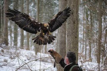 Auf der Pirsch mit dem Falkner
