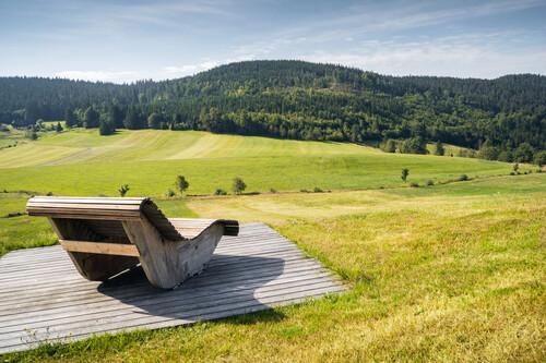 Himmelsliege im Schwarzwald