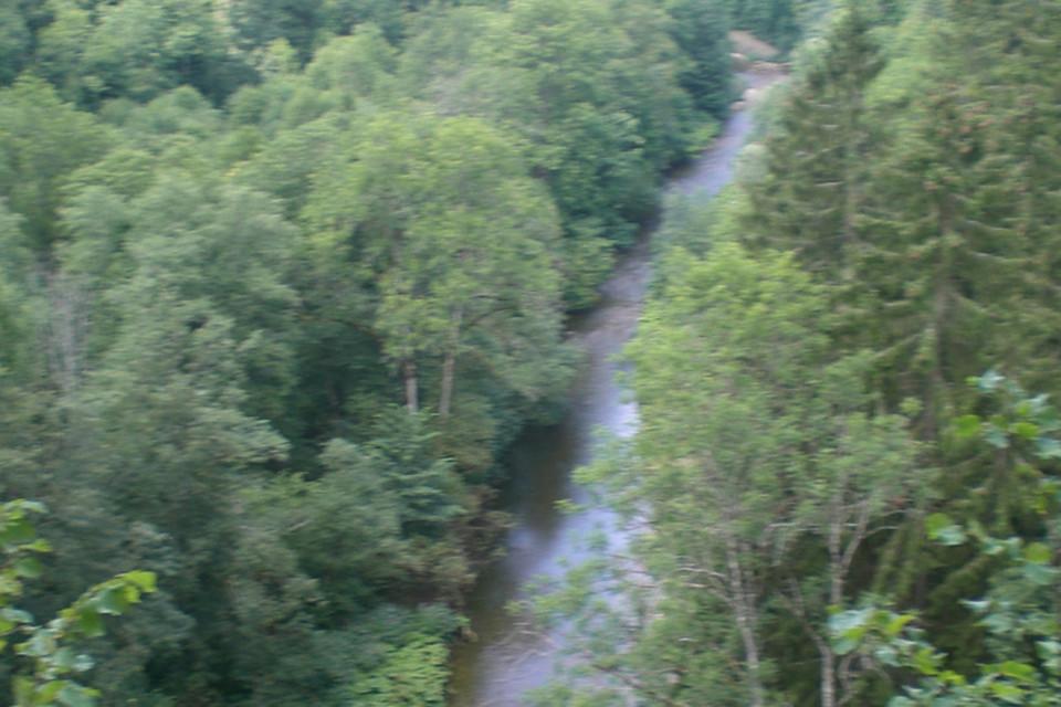 Die Wutach sucht sich den Weg durch den dichten Wald.