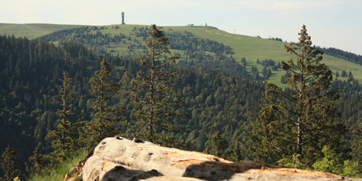 Die Sicht vom Herzogenhorn auf den Feldberg ist einfach unschlagbar.