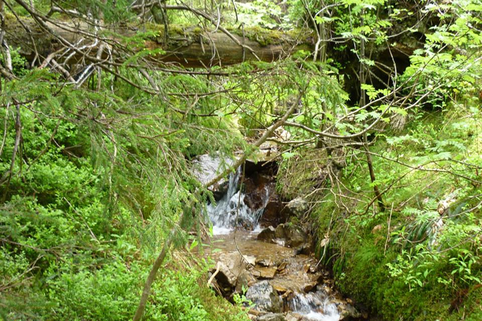 An dem kleinen Bach kommt das Wasser nicht nur von unten...