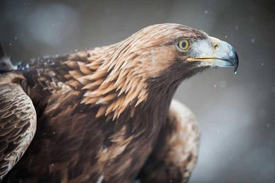 Bei Schnuppertagen in der Falknerei von Franz Ruchlak in Löffingen können Naturfreunde die Greifvögel hautnah erleben.