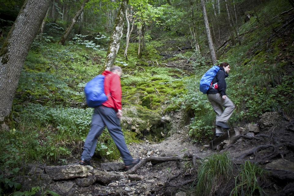 Der schmale Pfad führt durch struppigen Wald.