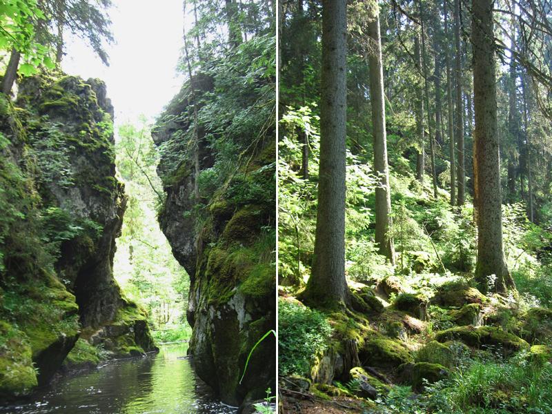 Wir kommen an vom Menschen unberührten Urwäldern vorbei.