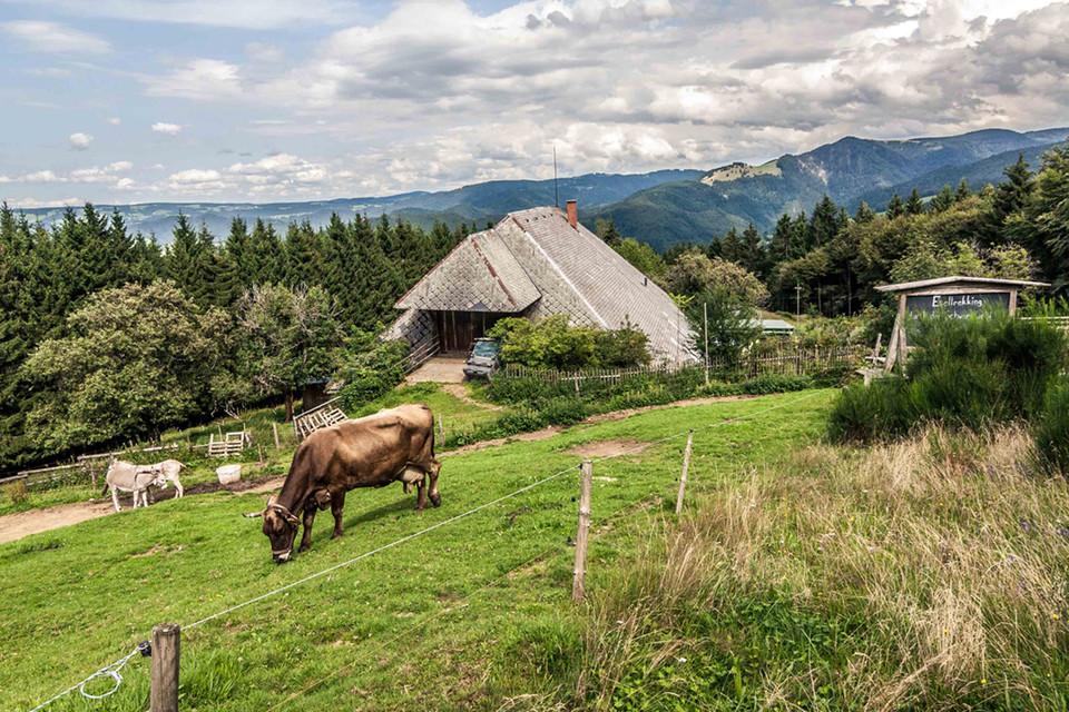 Das knorrige, 400 Jahre alte Schwarzwaldhaus schmiegt sich auf 850 Metern Höhe an einen steilen Berghang.